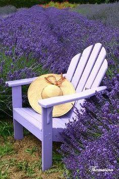 La Provence...lavander