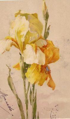 Catherine Klein cartão do Victorian de minha própria coleção de florais do vintage cartões postais