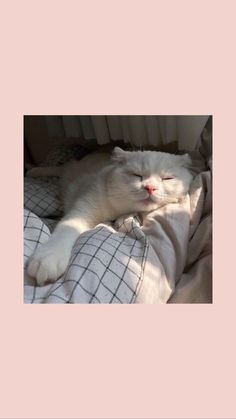 Tier Wallpaper, Cute Cat Wallpaper, Emoji Wallpaper, Cute Wallpaper Backgrounds, Animal Wallpaper, Disney Wallpaper, Wallpaper Wallpapers, Aesthetic Pastel Wallpaper, Aesthetic Wallpapers