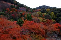 Autumn leaves at Kiyomizudera Temple in Kyoto. Let's wait another 5 weeks and they'll be back! (*_*)b