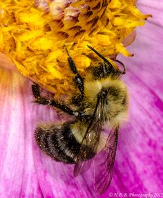 Look At All That pollen by Harold Begun, via 500px