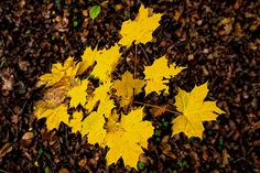 On The Forest Floor Forest Floor, October, Flooring, Facebook, Website, Twitter, Google, Plants, Photos