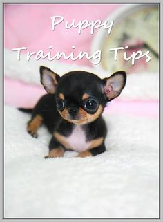 Easy Ways Of Caring Of A Dog -- Visit the image link for more details. #dog