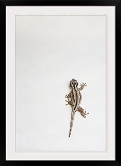 GreatBIGCanvas Gargoyle Gecko Lizard Crawling Photographic Print with black Frame 24 X 36 >>> Find out more about the great product at the image link.(It is Amazon affiliate link) #sunset Image Link, Poster Prints, Note, Sunset, Amazon, Frame, Beautiful, Black, Sunsets