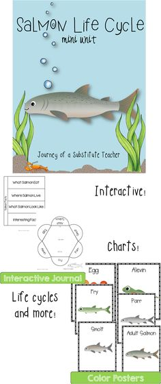 Salmon Life Cycle Mini Unit - before MK Nature Center 1st Grade Science, Elementary Science, Teaching Science, Science Activities, Educational Activities, Science Fun, Teaching Ideas, Fish Life Cycle, Interactive Journals