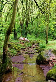 Plan your trip. Saint Nicholas, Greek Life, Travel Info, Greece Travel, Plan Your Trip, Europe, Horses, Explore, Park