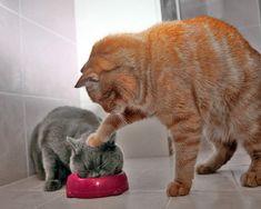 Ook katten plagen elkaar!
