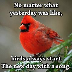 bird quotes I love motivation quotes so Im collecting them the same way people collect books or stamps. This is my ever growing collection of funny and motivation quotes. Bird Quotes, Me Quotes, Motivational Quotes, Bird Sayings, Quotes About Birds, Bird Poems, Funny Quotes, Wall Quotes, Wisdom Quotes