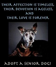 ADOPT/FOSTER/ RESCUE A SENIOR DOG ... THEY KNOW THE ROPES AND ARE THE BEST COMPANIONS! YOUR HEART WILL THANK YOU!