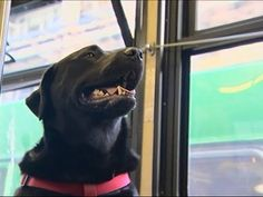 Every Day This Dog Rides The Bus All By Herself To Go To The Park | Bored Panda