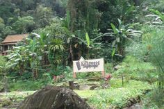 Curug Cipendok, Jabar - Indonesia.. Natural villas n view..
