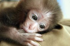 Baby monkey.