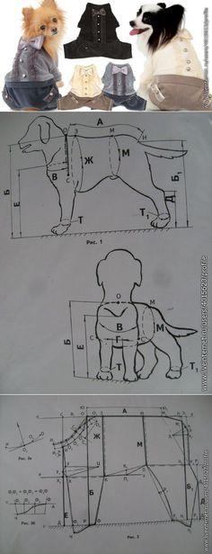 Projektując ubrania dla psów.