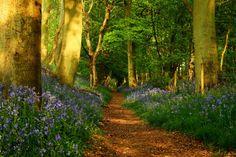 The Ridgeway, Grim's Ditch, Mongewell, Wallingford, Oxfordshire, England  by wormholealien
