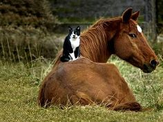 check out the look the horse is giving to the cat.