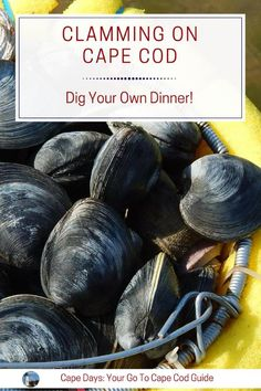 Cape Cod clams fresh from the sea. See when, where and how to dig your own dinner (legally)! Cape Cod Vacation, Cape Cod Ma, Taiwanese Cuisine, Taiwan Food, Sushi Art, Molecular Gastronomy, Clams, Fish And Seafood
