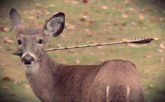 cervo_infilzato-tuttacronacahttp://tuttacronaca.wordpress.com/2013/11/12/la-freccia-gli-trapassa-il-muso-cucciolo-di-cervo-curato-dalla-guardia-forestale/