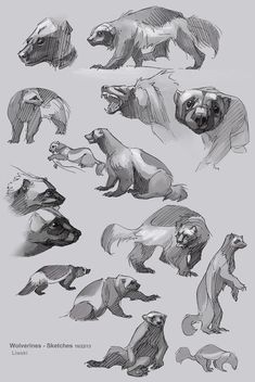 S art animal drawing reference animal sketches, an Wolverine Animal, Wolverine Art, Sailor Neptune, Animal Sketches, Animal Drawings, Wolverine Tattoo, Animal Anatomy, Sketch Inspiration, You Draw