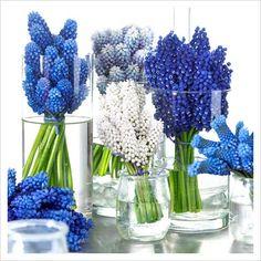 blue muscari flower centerpiece - Google Search