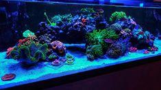 Acrylic Aquarium, Reef Aquarium, Saltwater Tank, Saltwater Aquarium, Best Aquarium Filter, Today Pictures, Corals, Tanks, Shelled