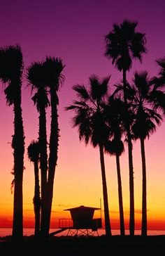 Palm trees at sunset, Venice Beach.