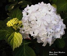 Plant a hydrangea! I like this white one.