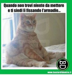 Memes Chats, Fanny Photos, Funny Cats, Funny Animals, Serious Quotes, Funny Times, Animal Jokes, Have A Laugh, Just Smile