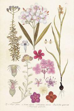 ST Vintage Flowers 'Kaart Hortensia Mix'