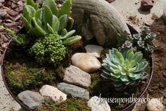 Lenten garden