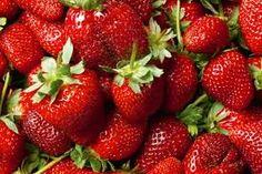 Erdbeeren Pflanze Die Erdbeeren sind eine Gattung in der Unterfamilie der Rosoideae innerhalb der Familie der Rosengewächse. Sie spielen schon seit der Steinzeit eine Rolle in der menschlichen Ernährung, erst mit der Einführung von amerikanischen Arten im 18