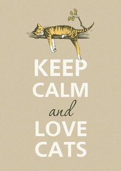 Keep calm and love cats - this my new motto - who would have ever guessed I would become a crazy cat lady? I Love Cats, Cute Cats, Funny Cats, Crazy Cat Lady, Crazy Cats, Animals And Pets, Cute Animals, Small Animals, Jungle Animals
