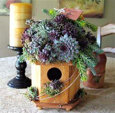 Another beautiful succulent roof top bird house by The Succulent Perch.    https://www.facebook.com/TheSucculentPerch