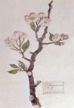 Plant Study ▫ Apple / Walberswick by Charles Rennie Mackintosh (CRM) in collaboration with Margaret Macdonald Mackintosh (MMM) ▫ 1915