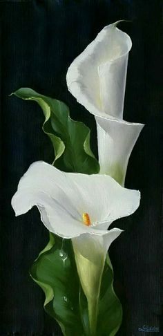 Wonderful Absolutely Free Calla Lily painting Thoughts Calla lilies will be the essential bridal bouquet flower. The actual lamps of this Africa bloom usua Lys Calla, Calla Lillies, Calla Lily Flowers, Lily Painting, China Painting, Watercolor Flowers, Watercolor Paintings, Watercolors, Arte Floral