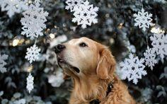 dog image full hd, 407 kB - Dodge Edwards
