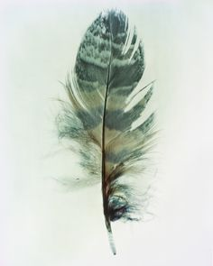 Feathers | Taylor Curry