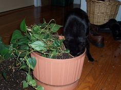 This article helps you learn how to protect plants from cats.