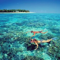 Cairns Snorkelling www.parkmyvan.com.au #ParkMyVan #Australia #Travel #RoadTrip #Backpacking #VanHire #CaravanHire