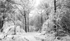 Winter-white woods