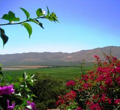 A Tour of Mexico's Wine Country: Baja Wineries are Worth the Visit. #travel #Baja #wine