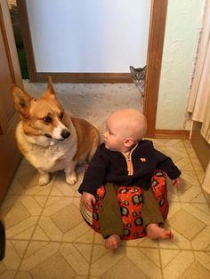 'Is the cat behind us?' ~ 'I'll have a Look for you Baby' - Cute Little Baby with a Corgi Dog and Cat