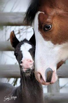Horse & Foal - Friesenpferde u. Baby Horses, Cute Horses, Horse Love, Wild Horses, Horse Girl, All The Pretty Horses, Beautiful Horses, Animals Beautiful, Painted Horses