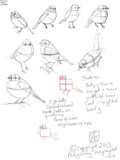 how to draw a robin - learn to sketch a bird step by step. Bird Drawings, Easy Drawings, Animal Drawings, Pencil Drawings, Drawing Birds, Robin Drawing, Doodle Drawing, Drawing Sketches, Painting & Drawing