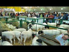 Importancia de las Ferias para el Sector Agropecuario  AgroExpo - TvAgro...