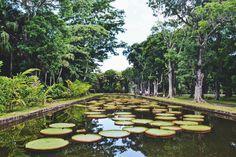 Le jardin botanique de Pamplemousses. 10 choses à ne pas manquer à l'Île Maurice #mauritius