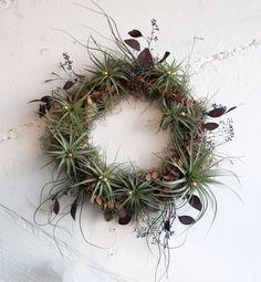 holiday wreath // air plant tillandsia // by robincharlotte. $128.00, via Etsy.