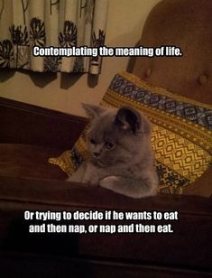 Isn't That The Meaning Of Life Though?