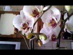 13) Как я поливаю, замачиваю, опрыскиваю и удобряю мои орхидеи ( Мой опыт) - YouTube