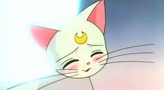 anime, artemis, cats, love, luna, sailor moon