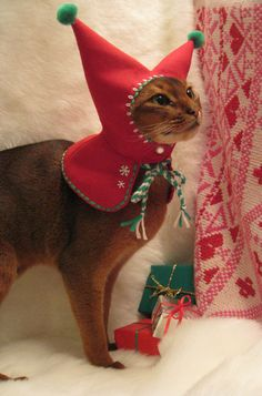 wool embroidered Meowy Christmas Holiday Elf Hood for cat plus free catnip toy. 85.00, via Etsy.